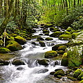 Mossy Mountain Stream by Frozen in Time Fine Art Photography