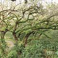 Mossy Oak by Joseph Williams