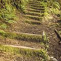 Mossy Path by Heather Applegate