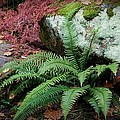 Mossy Rock And Fern by Patricia Strand