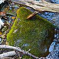 Mossy Rock by Brent Dolliver