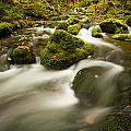 Mossy Rocks Along Lavis Brook In The by Irwin Barrett