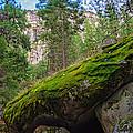 Mossy Rocks Along Vernal Falls Trail by Lynn Bauer
