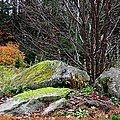 Mossy Rocks Garden by MTBobbins Photography