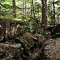Mossy Rocks In The Forest by Michelle Calkins