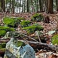 Mossy Rocks by Jake Donaldson