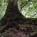 Mossy Roots by Roe Rader