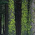 Mossy Sentinels by Donna Blackhall