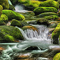 Mossy Stream E219 by Wendell Franks