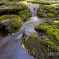 Mossy Stream by Michael Ver Sprill