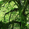 Mossy Tree by Athena Mckinzie