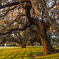 Mossy Trees At Sunset by Debra and Dave Vanderlaan