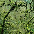 Mossy Trees Leafless In The Winter by Robert L. Potts