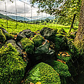 Mossy Wall by Adrian Evans