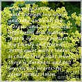 Most Powerful Prayer With Ladies Mantle by Barbara Griffin