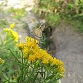 Moth by Anastasia Konn