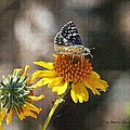 Moth And Flower by Tom Janca