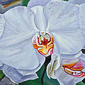 Moth Orchids by Gail Tunberg