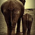 Mother And Baby Elephant In Black And White by Amanda Stadther