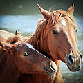 Mother And Filly by Athena Mckinzie