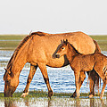 Mother And Foal by Bob Decker