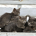 Cat And Kittens by George Atsametakis