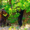 Mother Bear And Cub by Jeff Swan