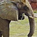 Mother Elephant by D Hackett