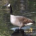 Mother Goose Is Watching by Brenda Brown