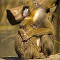 Mother Love by Sebastiaan Bosma