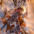 Mother Nature's Christmas Decorations - Golden Oak Leaves Jewels by Georgia Mizuleva