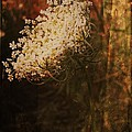 Mother Nature's Lace by Sherry Lasken