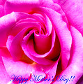 Mother's Day Rose by Mark Andrew Thomas