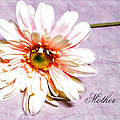 Mother's Gerber Daisy by Mary Timman