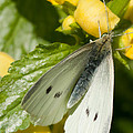 Moths Are Beautiful Too by Trish Tritz
