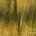 Motion Series - 123 by Paul W Faust -  Impressions of Light