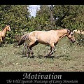 Motivation by Designs And Images