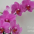 Mottled Orchid 1 by Mary Deal