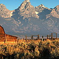 Moulton Barn - The Tetons by Stephen  Vecchiotti