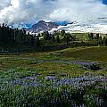 Mount Baker Lupine Meadows by Mike Reid