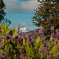 Mount Cook by Mark Llewellyn