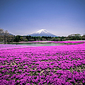 Mount Fuji Mos Phloxx by Andreas Jensen