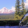 Mount Hood From Buzzard Point by Cari Gesch