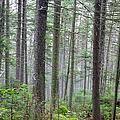 Mount Jim - Kinsman Notch New Hampshire by Erin Paul Donovan