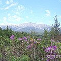 Mount Katahdin And Wild Flowers by Joseph Marquis