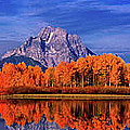 Mount Moran And Fall Color Grand Tetons by Dave Welling