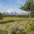 Mount Moran View by Brian Harig