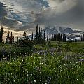 Mount Rainier Meadows Storm Brewing by Mike Reid