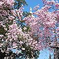 Baltimore's Mount Vernon In Spring by Marcus Dagan