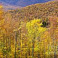Mountain Autumn by Alan L Graham
